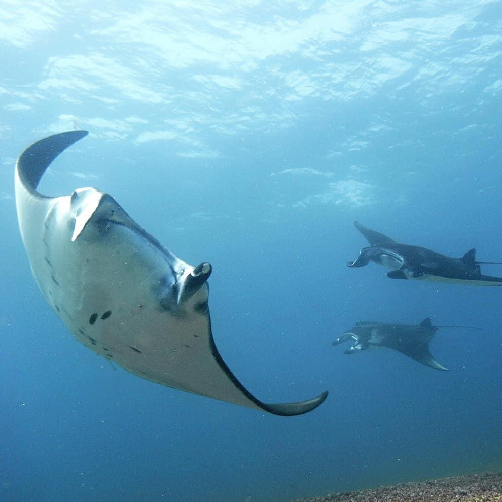 best diving in bali
