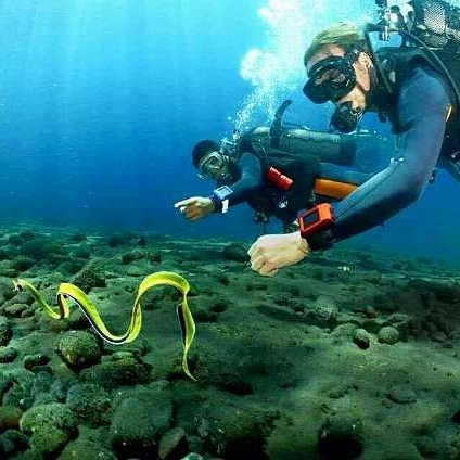 Best Way to Enjoy Bali Dive Sites on Holiday