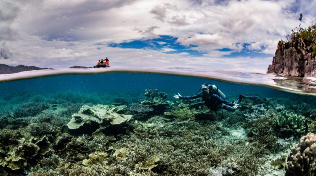 Komodo Diving Liveaboard